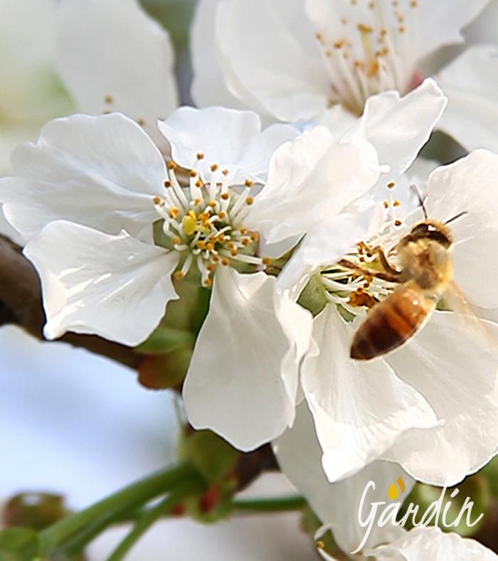 Chi sono le api - Apicoltura Gardin