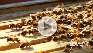 Apicoltur Gardin Le api alla fine dell'inverno