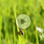 Cosa mangiano le api - Apicoltura Gardin