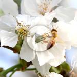 api e fiori Apicoltura Gardin