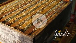 Smielatura di acacia Apicoltura Gardin
