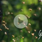 Quante bottinatrici impiega una colonia d'api - Apicoltura Gardin