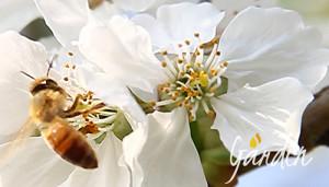 Futuro delle api - Apicoltura Gardin