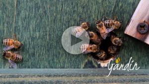 Una nuva stagione di fiori per le api - Apicoltura Gardin