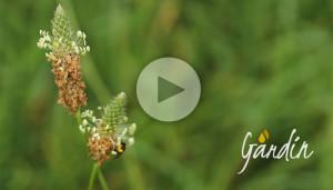 Micro api selvatiche- Apicoltura Gardin