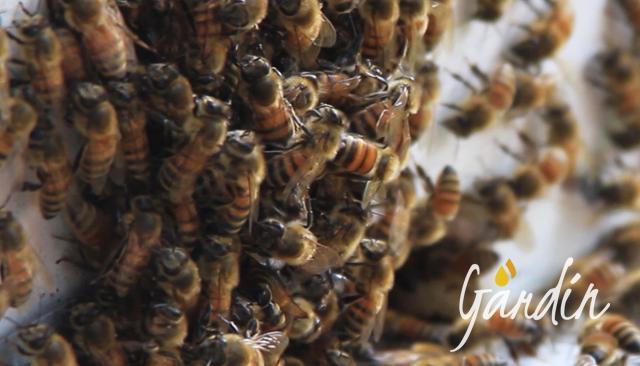 Il glomere: come fanno le api a difendersi dal freddo?