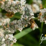 Il navigatore delle api