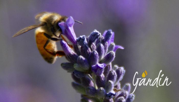 alle api piace