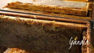 c'era d'api