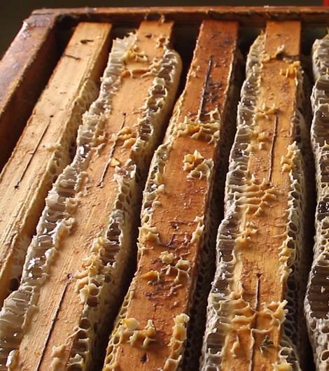 Favo pieno di miele Apicoltura Gardin