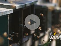 Un fiume d'api dell'apicoltura Gardin
