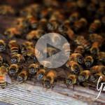 Chi ha detto che le api lavorano sempre - Apicoltura Gardin