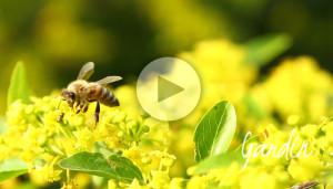 "Le api scrivono ""vuoto"" - Apicoltura Gardin"