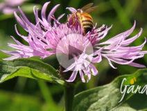 L'ultima scorta di miele Apicoltura Gardin