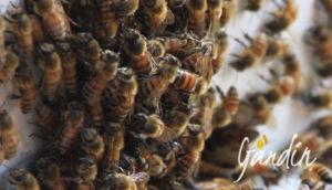 Apicoltura Gardin: Come fanno le api a difendersi dal freddo?