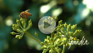 api fine stagione