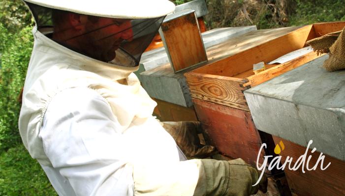 l'apicoltore aiuta le api